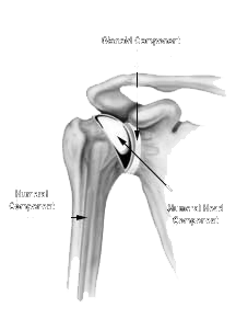 Shoulder Joint Repaired